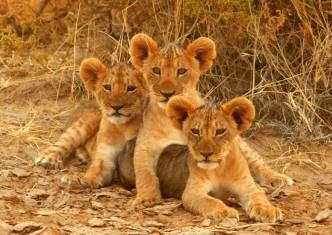 Kenia & Tansania Nationalpark Safari