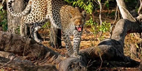 Botswana Abenteuerreise