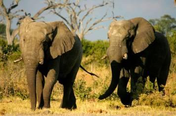 Die Wege der Elefanten