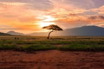 Abendstimmung im Tsavo