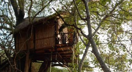 Krüger Nationalpark - Aufenthalt Baumhaus