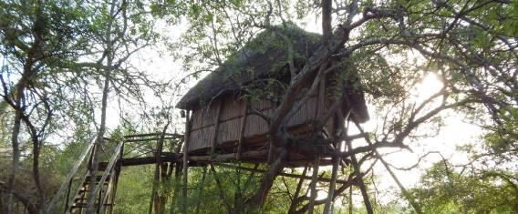 Krüger Nationalpark Safari - Erlebnis Baumhaus