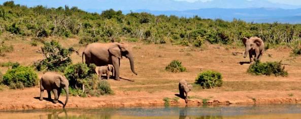Afrika Adventure - Von Kapstadt nach Kenia