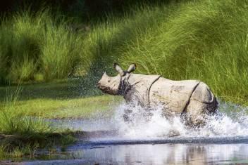 Nashorn im Kaziranga Nationalpark