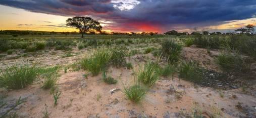 Südafrikas Hinterland entdecken