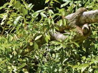 Regenwald-Erlebnis im Tortuguero Nationalpark