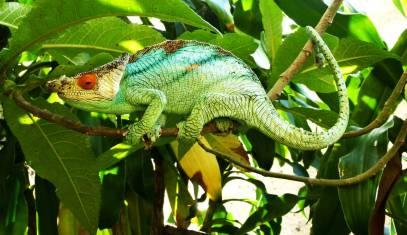 Madagaskars Süden
