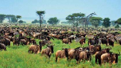Camping Safari Tansania - Manyara, Tarangire, Serengeti & Ngorongoro