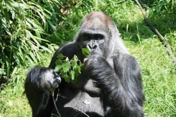 Gorilla Trekking in Uganda & Safari in Kenia