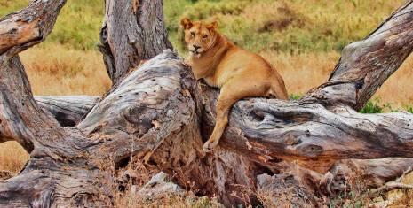 Von der Serengeti zu den Victoriafällen