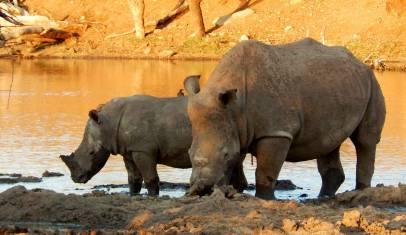 Krüger Nationalpark & Swaziland