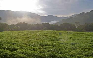 Ruanda - Gorillas im Nebel