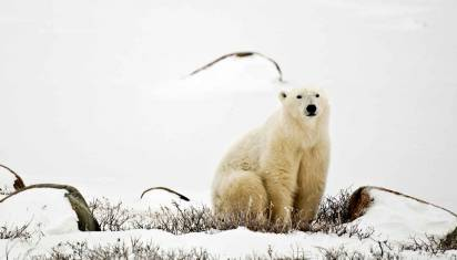 Eisbärenbeobachtung - Tundra Buggy Lodge