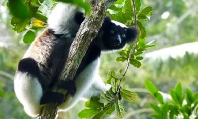 Madagaskar - Indris, Tsingys & Traumstrände