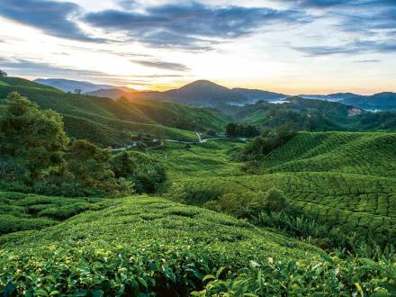 Cameron Highlands & Belum Regenwald