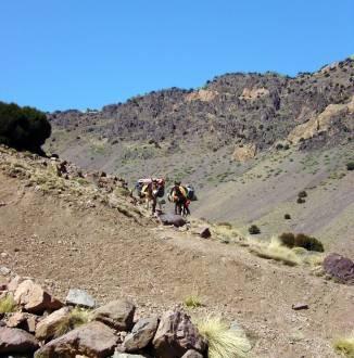 Mulis bei der Mount Toubkal Besteigung