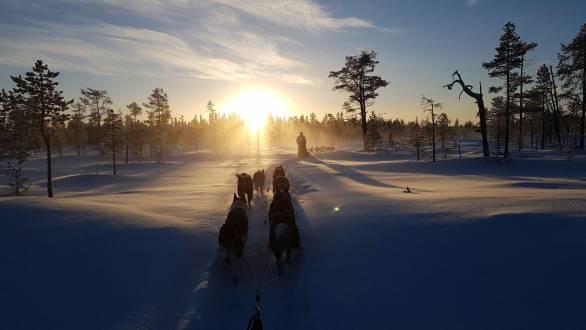 Schwedens Winterwunderland im Hundeschlitten.