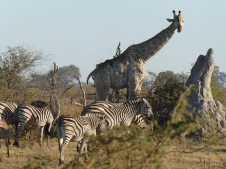 Okavango_Delta_V_J_mojaTravel