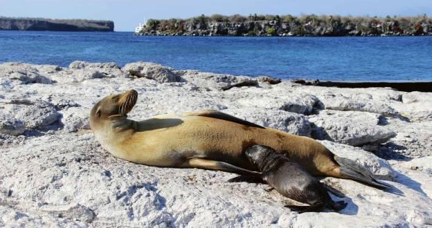 Galapagos bezaubernde Inselwelten