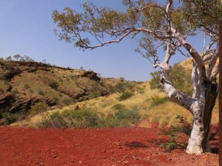 Außergewöhnliche Landschaft im Outback Australien