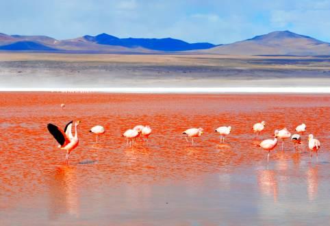 Die Laguna Colorada und ihre gefiederten Bewohner.