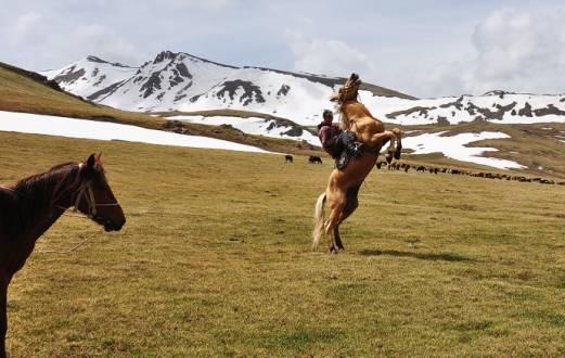Wild geht's zu in Kirgistan.