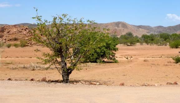 Landschaft Damaraland in der Sonne Namibias.