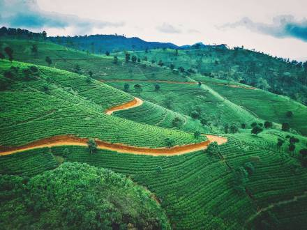 Sri Lanka Teeplantagen