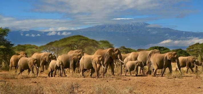 reisethemen_ostafrika_tansania-safari-Elefanten-Kilimandscharo.jpg